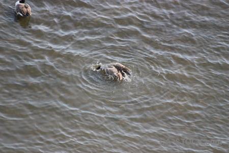 Pond water bird aquatic animal.