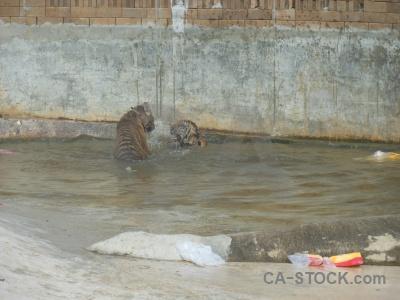 Pool wat pa luangta maha bua yannasampanno southeast asia water pha luang ta.