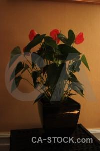 Pot brown flower plant orange.