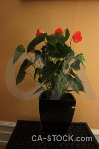 Pot flower plant brown orange.