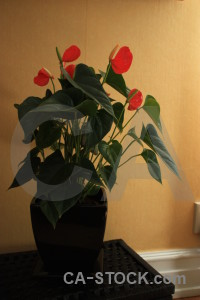 Pot plant brown flower orange.