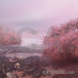 Premade pink backgrounds fantasy.