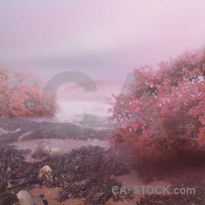Premade pink backgrounds fantasy.