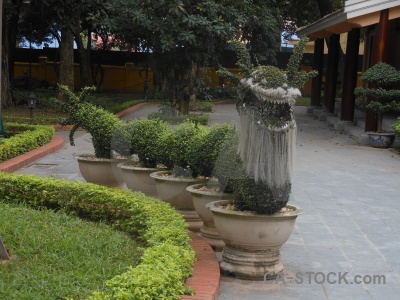 Presidential palace southeast asia tree ho chi minh beard.