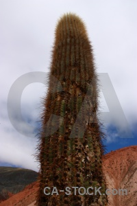 Purmamarca cliff south america salta tour cactus.