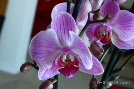 Purple plant flower orchid.