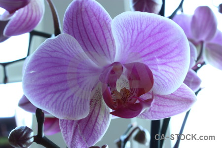 Purple plant orchid white flower.