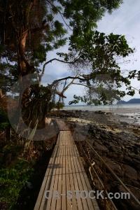 Railing rock tree water southeast asia.