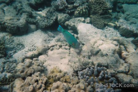 Reef animal coral underwater fish.