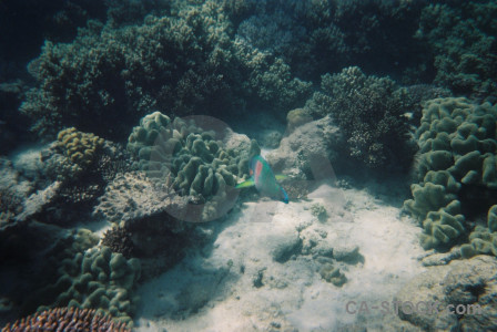 Reef coral fish animal underwater.
