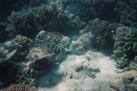 Reef coral fish animal underwater.