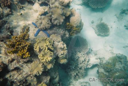 Reef green underwater coral.