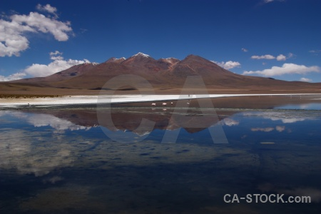 Reflection flamingo landscape andes salt lake.