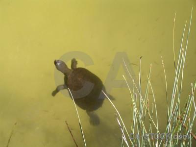 Reptile animal turtle.