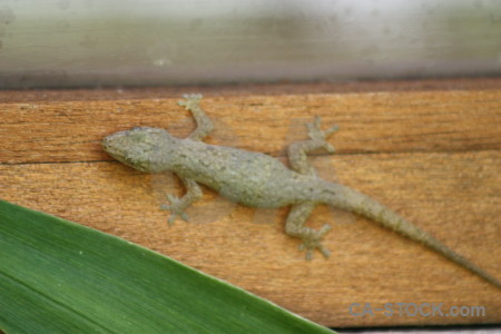 Reptile brown green orange lizard.
