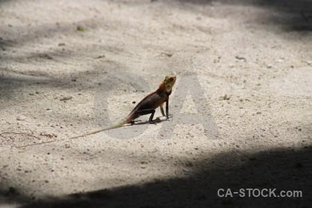Reptile lizard animal.