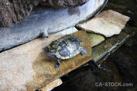 Reptile turtle animal.