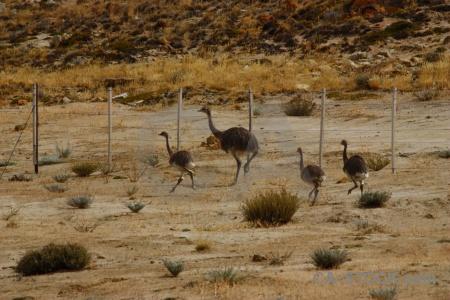 Rhea field south america animal fence.