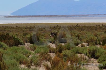 Rhea sky salinas grandes salt flat ostrich.