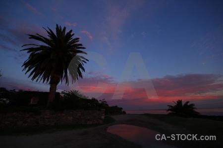 Rio del la plata sea sunset palm tree sunrise.