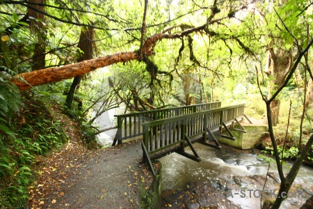River bridge new zealand forest owaka.