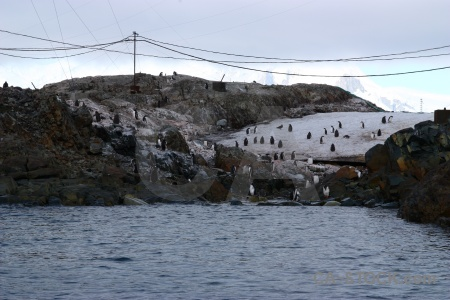 Rock day 8 penguin antarctica cruise argentine islands.