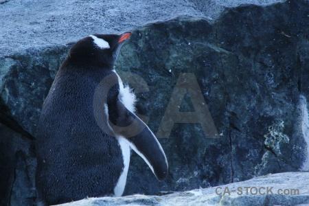 Rock day 8 petermann island antarctic peninsula south pole.