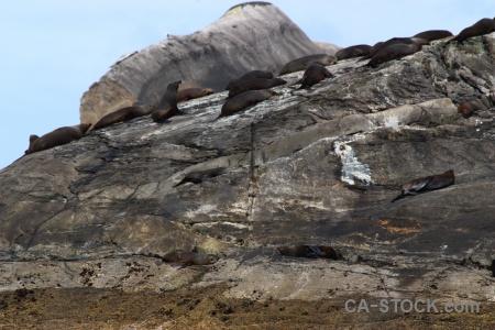 Rock doubtful sound sky animal seal.