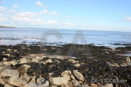 Rock landscape seaweed coast.