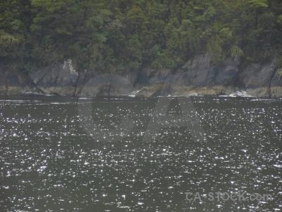 Rock new zealand doubtful sound tree fiordland.