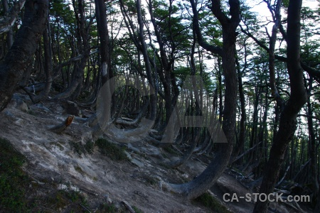 Rock south america forest trunk patagonia.