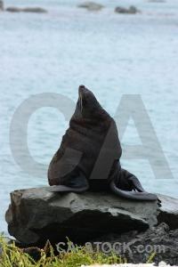 Rock south island water sea seal.