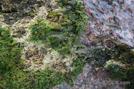 Rock stone texture green.