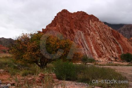 Rock tree mountain cerro de los siete colores purmamarca.