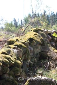 Rock wall stone moss plant.
