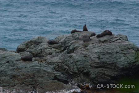 Rock water seal animal new zealand.