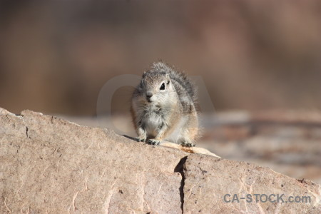 Rodent animal squirrel.