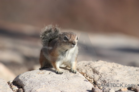 Rodent squirrel animal.