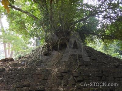 Root buddhism block angkor lichen.