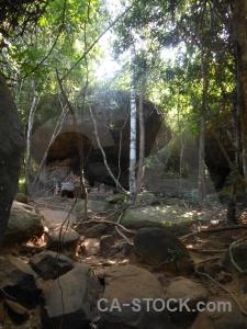 Root rock asia kbal spien sky.