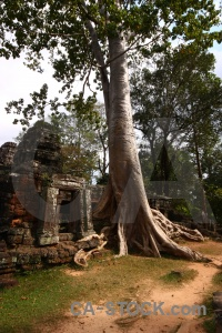 Root southeast asia siem reap unesco block.