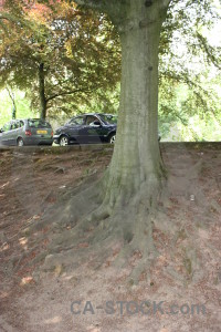 Root vehicle tree green car.