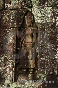 Ruin angkor plant temple siem reap.
