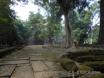 Ruin cambodia plant fungus siem reap.