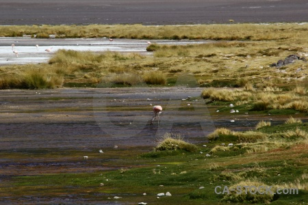 Salt lake bird altitude bolivia animal.