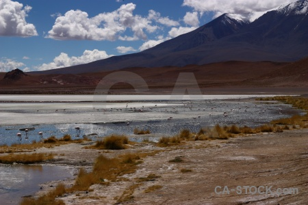 Salt lake bolivia salt south america.