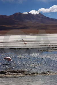 Salt lake cloud salt flamingo bolivia.