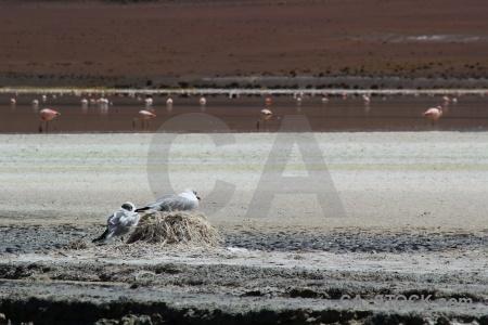 Salt lake laguna hedionda bolivia salt altitude.