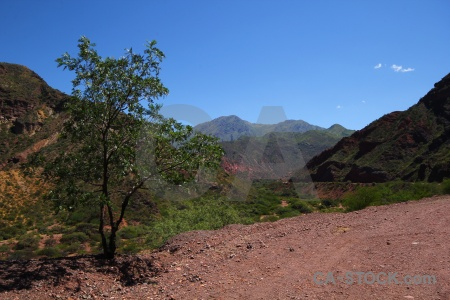 Salta tour 2 bush landscape quebrada de las conchas tree.