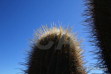 Salta tour 2 sky altitude cactus south america.